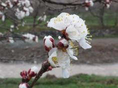 ilkbaharda kagizman - hilmi alici